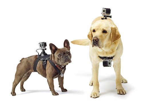 GoPro Dog Mount/ GoPro Mount for Dog Harness