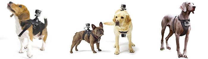 Best Gopro Dog Mount And Gopro Pet Mounts Action Camera