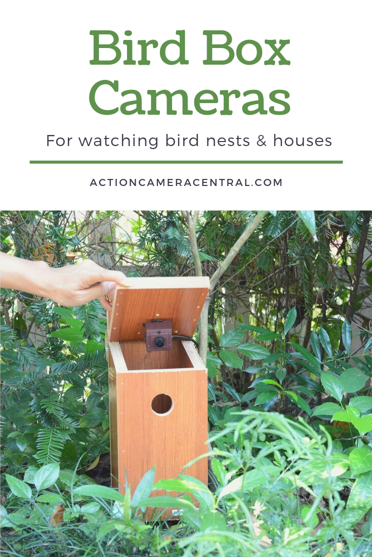 Best Bird Box Cameras for Nests & Birdhouses