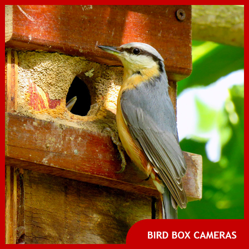 Best Bird Box Cameras
